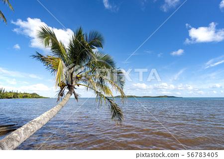 Palm trees on New Caledonia, Montdor, Corniche coast 56783405