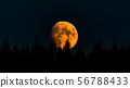 Yellow moon on dark sky with trees in foreground. 56788433