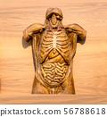 Anatomical model of human, internal organs 56788618