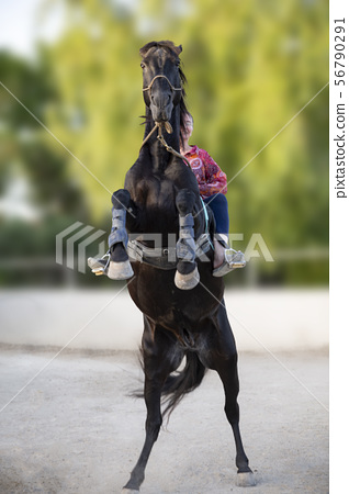 riding girl and horse 56790291