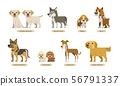 vector set of dogs with flat style 56791337