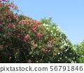 白色唯一花和竹子叶子双重传播花 56791846