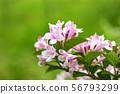springtime  56793299