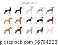 Great dane. Different variaties of coat color dog 56794223