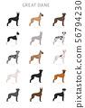 Great dane. Different variaties of coat color dog 56794230