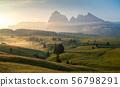 Seiser Alm (Alpe di Siusi) ,Dolomites, Italy 56798291