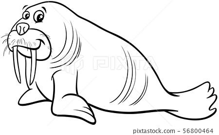 walrus animal character cartoon coloring page 56800464
