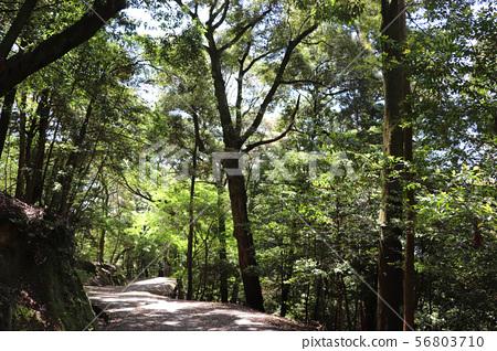 森林长廊 56803710