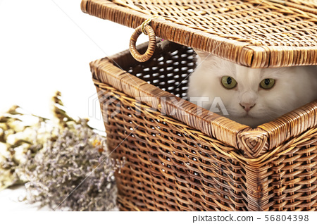 Cute little whithe cat sitting in basket with 56804398