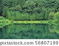 녹색으로 물든 여름 나카 쓰나 코 56807199