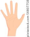 女性手势/手标志例证/开放手/棕榈/同水准 56807758
