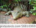 crocodile 56810969