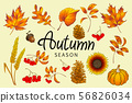 Set of colorful autumn leaves and berries. 56826034