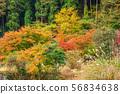 ใบไม้เปลี่ยนสีและซูซุกิ 56834638