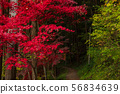Red maple ① 56834639