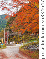 Colored leaves, railroad crossings and bicycle storage ① 56834647
