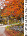 Colored leaves, railroad crossings and bicycle parking area ② 56834648