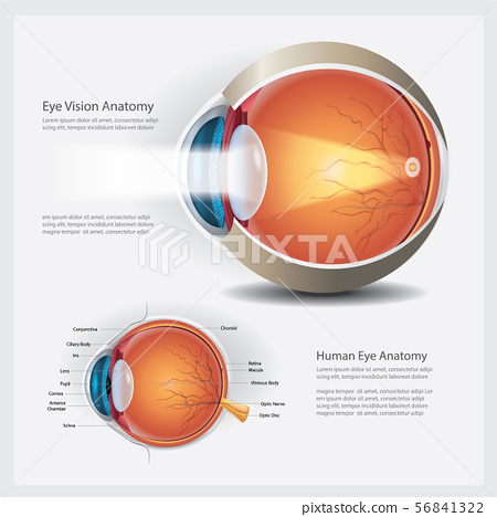 Human Eye Anatomy Vector Illustration 56841322