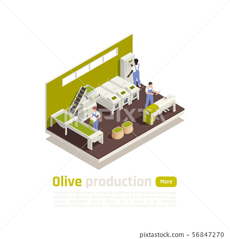 Olive Production Isometric Composition  56847270