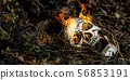 In front of human skull buried on fire in the soil 56853191