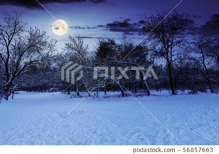 park in winter at night 56857663