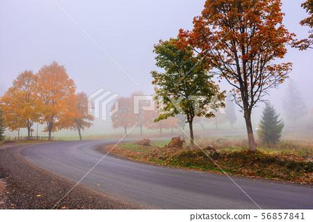 road winding through fog in autumn 56857841