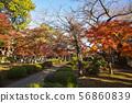 Futsukuji在秋天 56860839