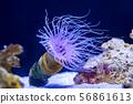 [東京] Aqua Park Shinagawa Sea anemone 56861613