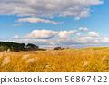 깨끗한 푸른 하늘 아래 황금빛 억새 초원 56867422