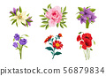Beautiful Flowers Set, Lily, Peony, Poppy, Gerbera Vector Illustration 56879834
