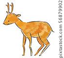 사슴 56879902