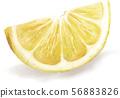 레몬 리얼 일러스트 56883826