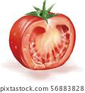番茄真實插圖 56883828