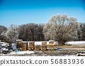 Timber industry. Cut tree planks in the forest, 56883936