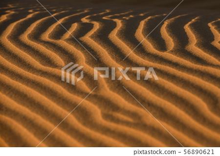 사막 56890621