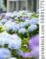 พืชไม้ดอกขนาดใหญ่ 56891775