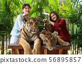 Asian young women catches the tiger at Tiger park ,Pattaya ,Chonburi,Thailand. 56895857