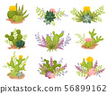 Set of blooming cacti. Vector illustration on a white background. 56899162