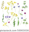 Set of watercolor wild yellow, red, blue flowers 56903036