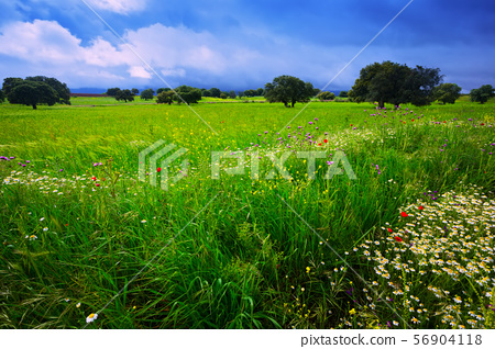 field with heavy clouds 56904118