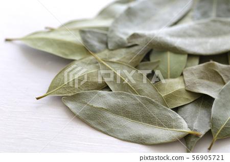 로리의 잎 56905721