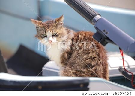 Cat of Tashirojima 56907454