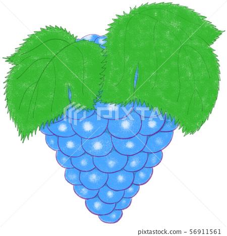 Grape (blue) 56911561