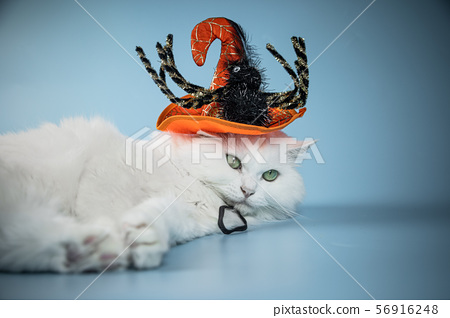 White Cat Dressed For Halloween 56916248