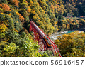Autumn leaves in Kurobe gorge 56916457
