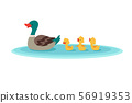Mother duck and little ducks in water. Ducklings swimming in row. Cartoon vector illustration 56919353