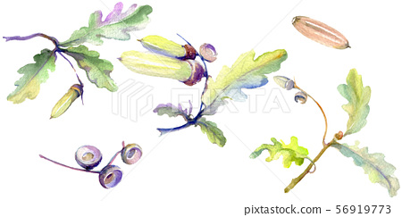 Forest acorn green leaf and nut. Watercolor background illustration set. Isolated oak illustration 56919773