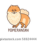 Isolated Pomeranian in Hand Drawn Doodle Style 56924444