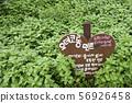 허브식물원, 허브식물 56926458