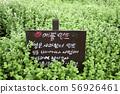 허브식물원, 허브식물 56926461